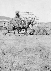 Haying on the Cairn's Ranch
