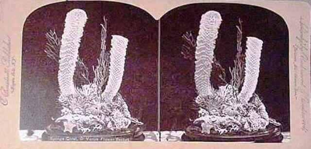 card-35-coral-flower-bsk